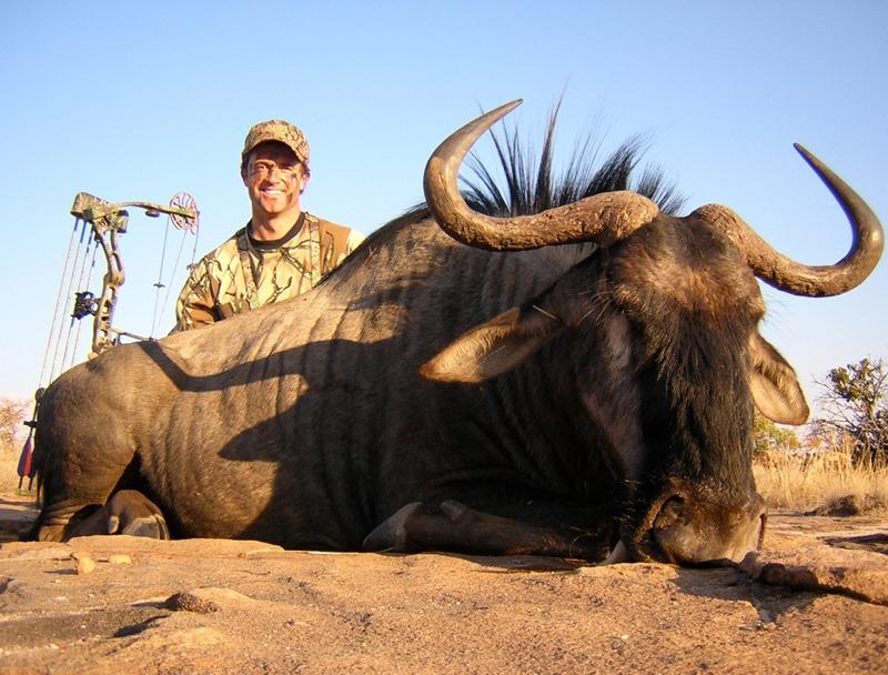 Africa Blue Wildebeest, 2006